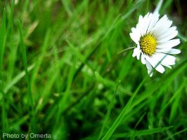 Lonely Daisy by LeMavrica