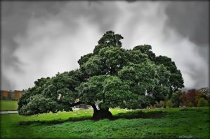 Tree Of Wonder by Estruda