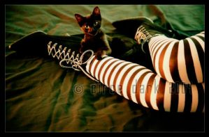 Stripes and the black cat II by circedark