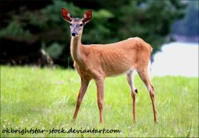 Deer 5 by okbrightstar-stock