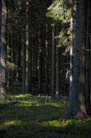 A walk in the forest by RavensLane