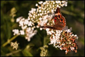 August Butterflies 2011 - 02 by ryangallagherart