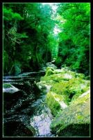 The Fairy Glen Revisited by Forestina-Fotos