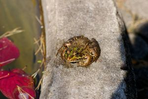 Frog II by expression-stock