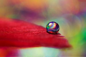 A Colorful Day by SheilaBrinson