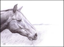 Horse Drawing by sherwoodwhisper