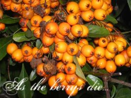 As the berrys die... by poisoned-well