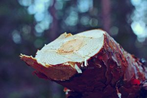 Wood by Shulaev