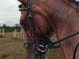 Horse Portrait by emmy1320