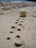Footprints in the sand by Meepyourface