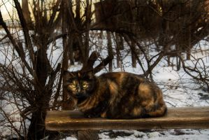 Cat on the bench by Kittengrapher