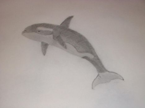 Orca Sketch by PeaceFrog777