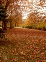 Autumn by LadyTamsin
