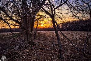 Entwined by JustinDeRosa