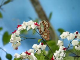 Butterfly acrobatic... by blackholediver