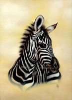 Baby Zebra by Shazhutch