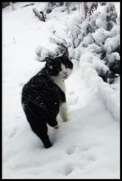cat in snow I by 666Bruno