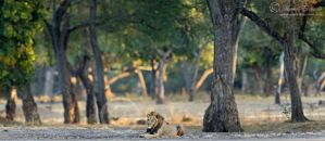 Forest King by MorkelErasmus