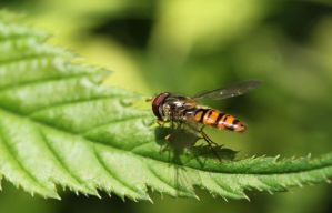 hover fly by tap69