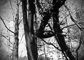 The Roots of a Tree 14 by Jude-Monteleone