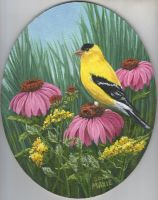 Goldfinch on a Coneflower by artofmaxielee