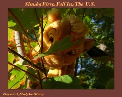 Simbas First Fall In the US by DoloAndElectrik