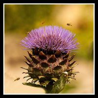 Busy Bees by SnapperRod