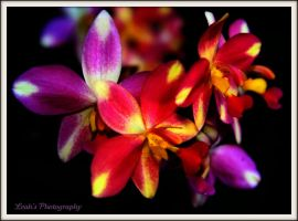 Orchids flowers by Leahvarney