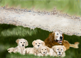 Mother and 4 pups Golden Retriever by MacAodhagain