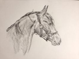 Through the forelock by Horsesdontlie