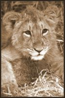 Little Lion by lomoboy
