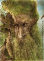 Treebeard _Barbol by vegetanivel2