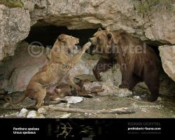 Cave Lion and Cave Bear by Rom-u