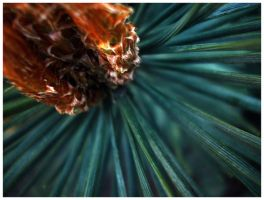 Pine Tree by Sugargrl14