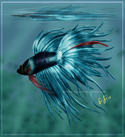 Chopin the Betta by Jullelin
