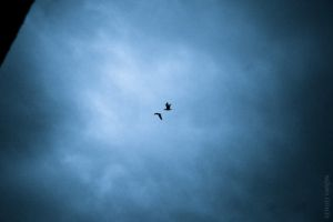 Two birds in cold sky by mtFr0st