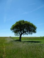 Tree In A Field by Its-Only-Stock