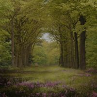 Enchanted Forest 2 Premade Background by VIRGOLINEDANCER1