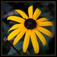 Yellow Flower by FilipaGrilo