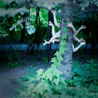 arachnid. by Portrait-of-Light