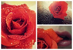 Dew Drop Rose Collage by sdmoon