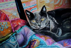 Hexe cat amongst the pillows by BecciES