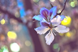 A Flower Quickly Fading by axcvilla