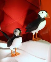 Pretty Puffins by Lust0fADeeperPain