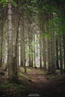 Inside forest. by MateuszPisarski