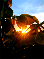 Leaf Is Bathed In Sunlight by Marsala