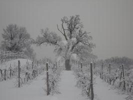 The keeper of the vineyards by enrico-ors-91