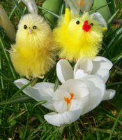 Easter Chicks 1 by bttfmjffan