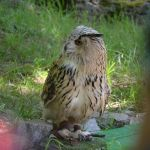 another owl by mimose-stock