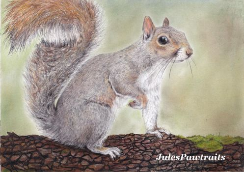 Squirrel by JulesPawtraits
